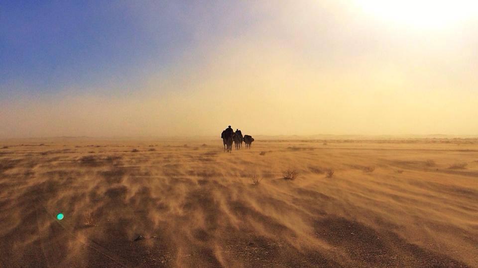 essays on desert life