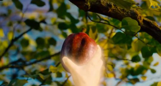 noah fruit